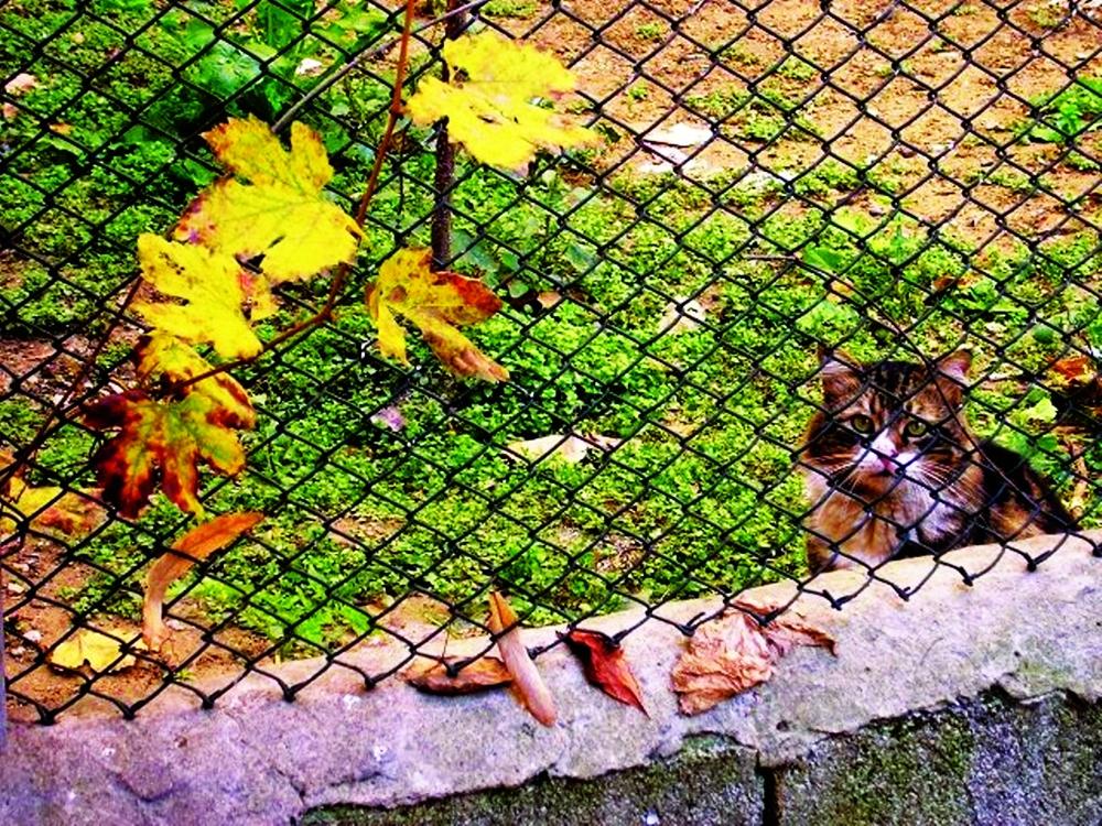 Figure 19, Cihangir cat in fall, Istanbul