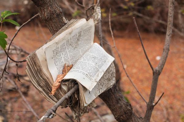 Codex book tree