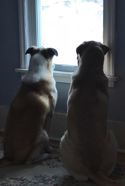 Two Dog Tuesday